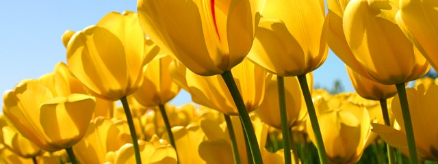 Tulips - Networking your business, Conversations Starters